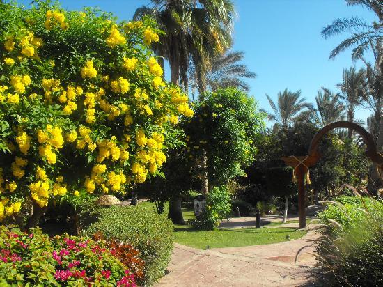 Nubian Island Hotel image11