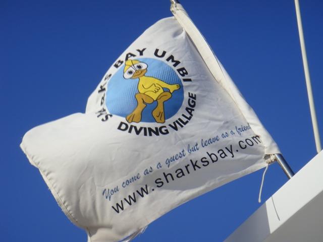 Sharks Bay Umbi Diving Village image18