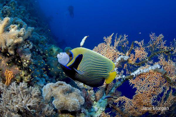Sharm El Sheikh Marriott Resort image9
