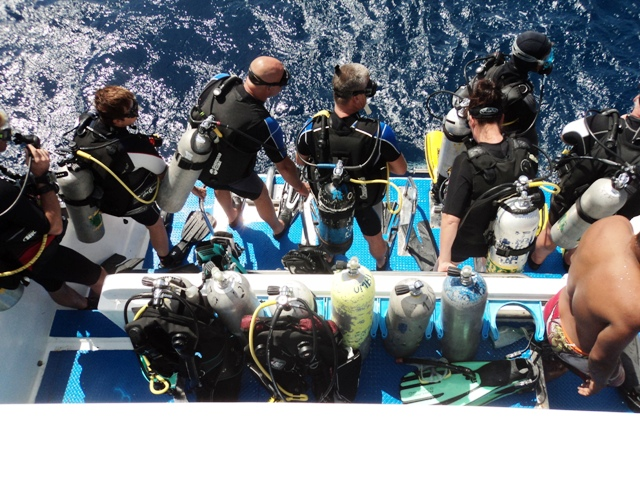 Sharks Bay Umbi Diving Village image7