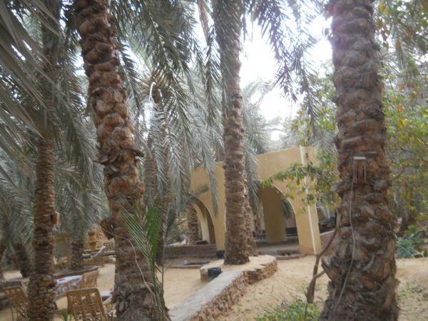 PalmTrees Hotel image6