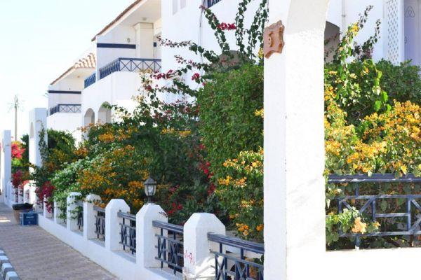 Riviera Sharm Garden view image2
