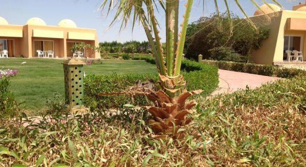 Wadi Lahmy Azur Resort image9