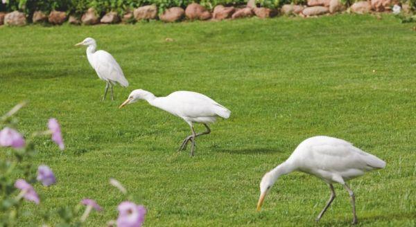 Mövenpick Resort Sharm El Sheikh Naama Bay image10