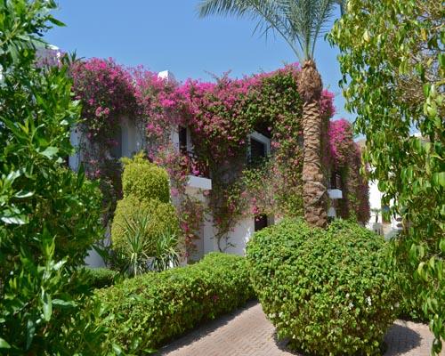 Mexicana Sharm Resort image13