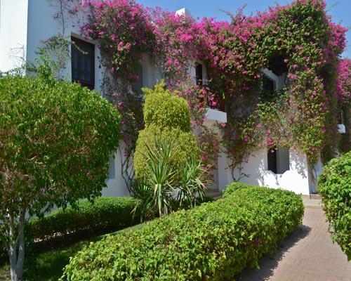 Mexicana Sharm Resort image21