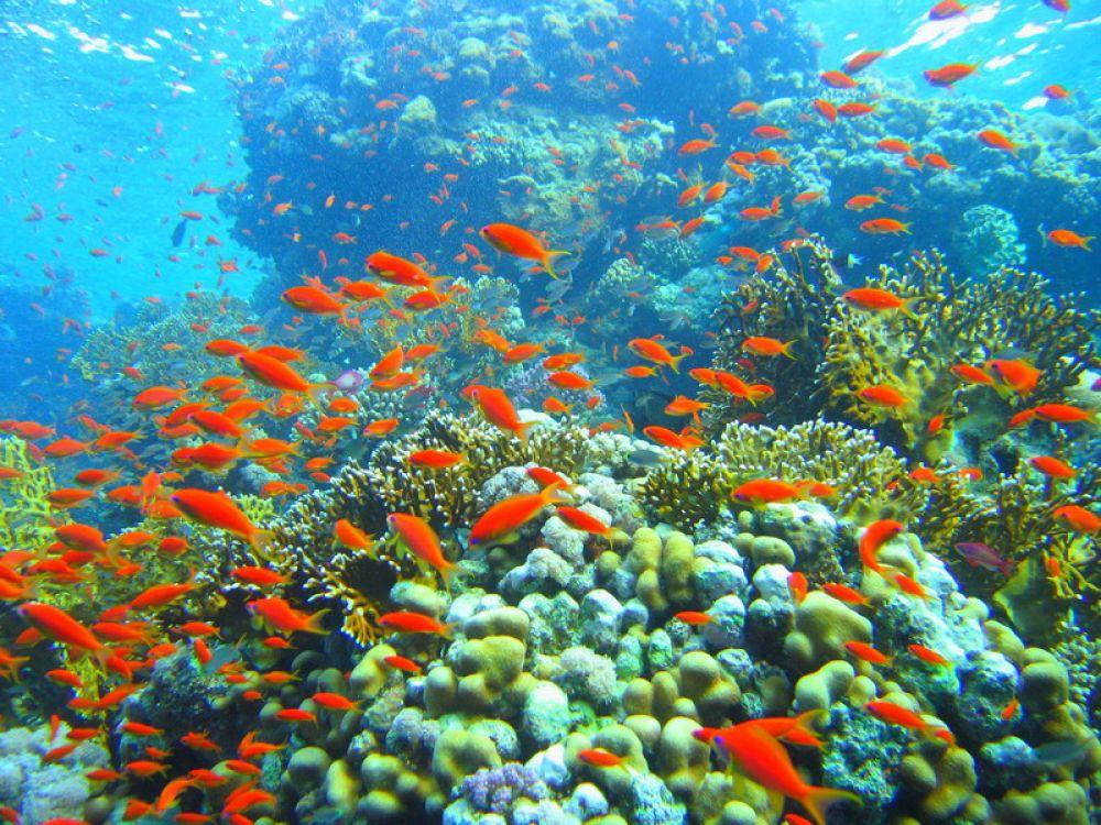 underwaterrasmohamed.jpg